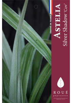 Astelia 'Silver Shadow ®'