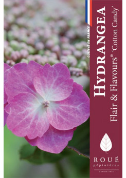 Hortensia serrata 'Flair & Flavours®'