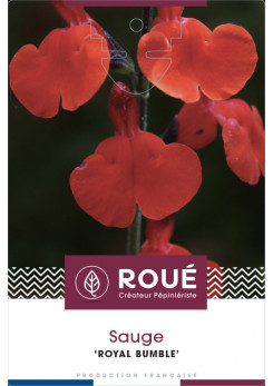 Sauge - Salvia 'Royal Bumble'