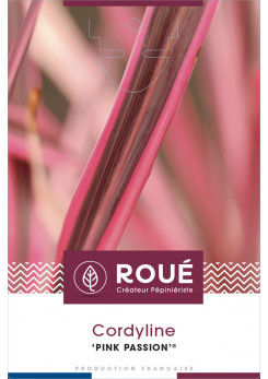 Cordyline 'Pink Passion ® '